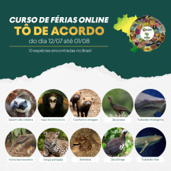 CURSO DE FÉRIAS ON-LINE